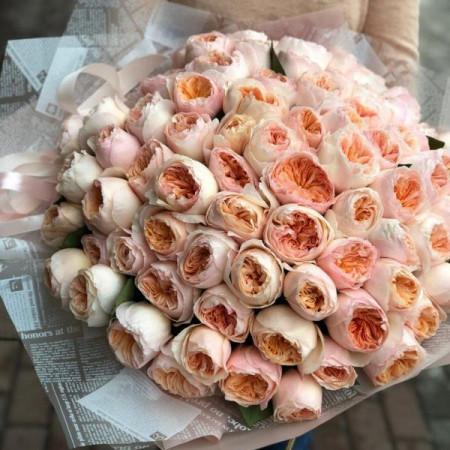 81 шикарная пионовидная роза